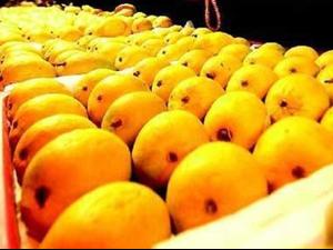 technology-assures-longer-shelf-life-mangoes-biotech-equipment.png