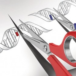 Gene Editing Tool CRISPR Is Making Scientists Face The Hard Questions