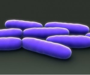 Gut bacteria that 'talk' to human cells may lead to new treatments