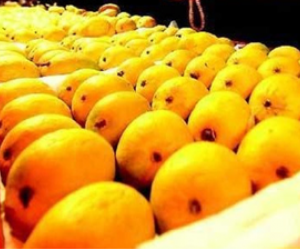 New technology assures longer shelf life, season of mangoes